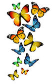 Muitas borboletas diferentes, isoladas no fundo branco — Fotografia Stock