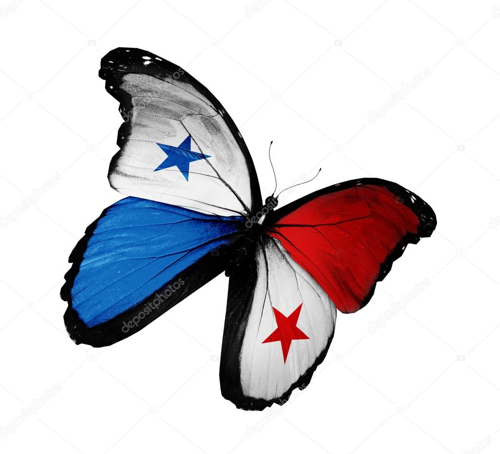 Mariposa bandera panameña volando, aislado sobre fondo ...