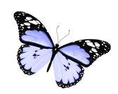 Modrý motýl, izolovaných na bílém pozadí — Stock fotografie