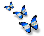 Three Nicaragua flag butterflies, isolated on white — Stock Photo