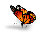 Orange butterfly , isolated on white — Stock Photo