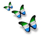 三个塞拉利昂旗蝴蝶,孤立在白色 — 图库照片