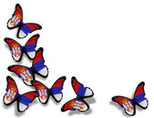 Servië vlag vlinders, geïsoleerd op witte achtergrond — Stockfoto