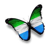 Sierra leone vlag vlinder, geïsoleerd op wit — Stockfoto