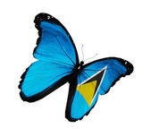Saint Lucia flag butterfly flying, isolated on white background — Stock Photo
