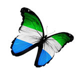 Papillon de drapeau Sierra leone flying, isolé sur fond blanc — Photo
