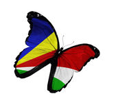 Seychellois flag butterfly flying, isolated on white background — Stock Photo