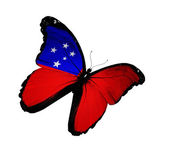 Samoa flag butterfly flying, isolated on white background — Stock Photo
