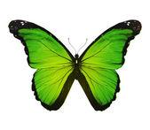 бабочка морфо зеленый, изолированные на белом — Стоковое фото