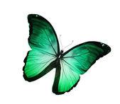 绿色绿松石蝴蝶,孤立在白色 — 图库照片