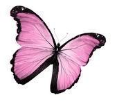 Mariposa rosa, aislado en blanco — Foto de Stock