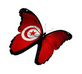 Tunisian flag butterfly flying, isolated on white background — Stock Photo