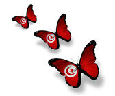 Three Tunisian flag butterflies, isolated on white — Stock Photo