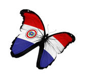 Paraguayan flag butterfly flying, isolated on white background — Stock Photo