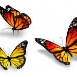 três borboleta amarela, isolado no fundo branco — Foto Stock