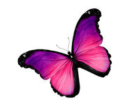 Violet butterfly on white background — Stock Photo