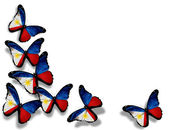 Philippine flag butterflies, isolated on white background — Stock Photo