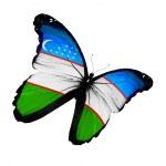Uzbek flag butterfly flying, isolated on white background — Stock Photo #13098848