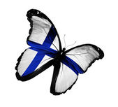 Finnish flag butterfly flying, isolated on white background — Stock Photo