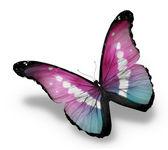 Mariposa azul violeta morfo, aislado sobre fondo blanco — Foto de Stock