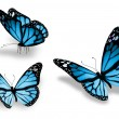 Three blue butterfly, isolated on white background — Stock Photo #13176564