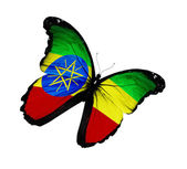 Ethiopia flag butterfly flying, isolated on white background — Stock Photo