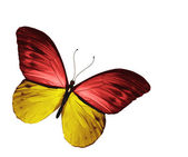 Yellow red butterfly, isolated on white background — Stock Photo