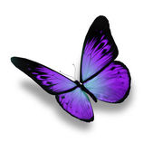 Violet butterfly flying, isolated on white background — Stock Photo