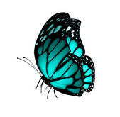 Mariposa turquesa, aislado en blanco — Foto de Stock