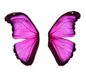 Wings of morpho pink butterfly , isolated on white — Stock Photo