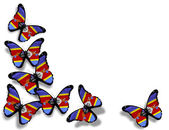 Swaziland flag butterflies, isolated on white background — Stock Photo