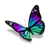 Schmetterling, isoliert auf weißem hintergrund — Stockfoto