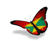 Grenada flag butterfly flying, isolated on white background — Stock Photo