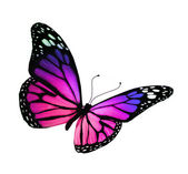 Violet vlinder, geïsoleerd op witte achtergrond — Stockfoto