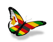 Zimbabwe flag butterfly flying, isolated on white background — Stock Photo