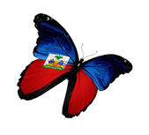 Haiti flag butterfly flying, isolated on white background — Stock Photo