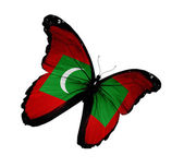 Maldivian flag butterfly flying, isolated on white background — Stock Photo