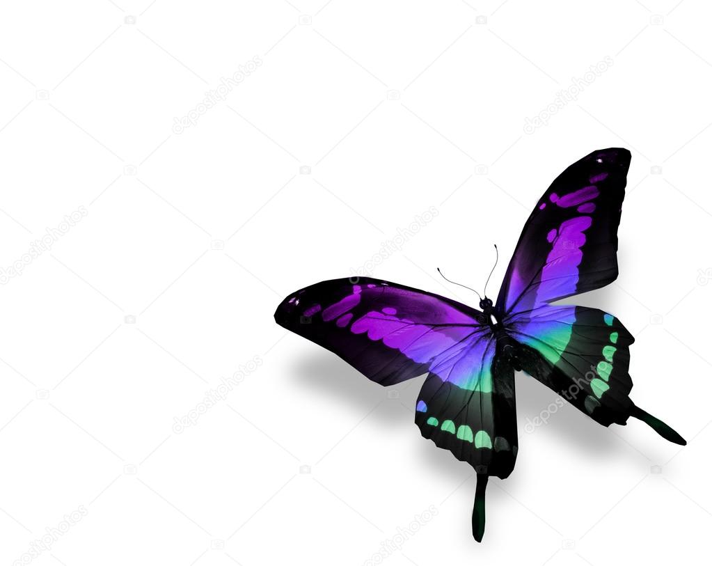 Butterfly , isolated on white background — Stock Photo #13656646
