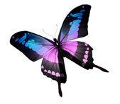 Morpho violett fjäril, isolerad på vit — Stockfoto