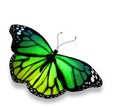 Mariposa verde, aislado sobre fondo blanco — Foto de Stock