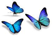 Drei blauer schmetterling, isoliert auf weißem hintergrund — Stockfoto