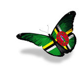 Dominica flag butterfly flying, isolated on white background — Stock Photo