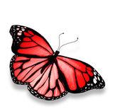 Röd fjäril, isolerad på vit bakgrund — Stockfoto