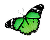 Green butterfly, isolated on white background — Stock Photo