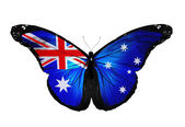 Australia flag butterfly flying, isolated on white background — Stock Photo