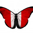 Peruvian flag butterfly flying, isolated on white background — Stock Photo