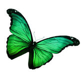 Green butterfly on white background — Stock Photo