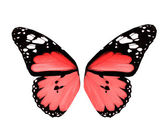 Wings of pink butterfly, isolated on white background — Stock Photo