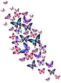 Nombreux papillons différents, isolés sur fond blanc — Photo