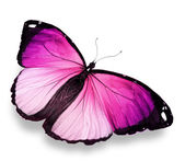 Morpho pink butterfly , isolated on white — Stock Photo
